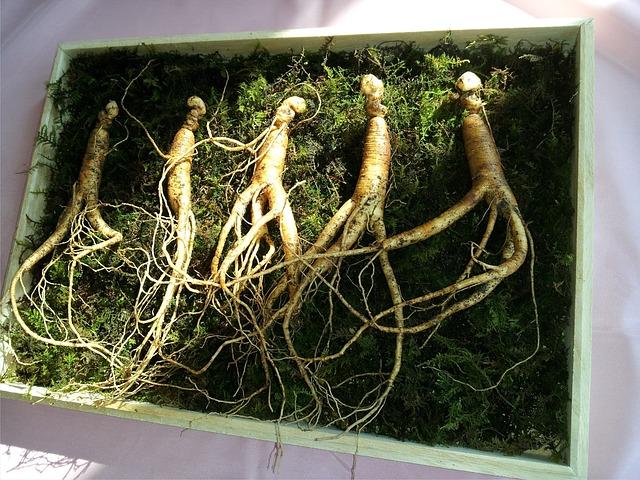 1. Ginseng - www.baki.at